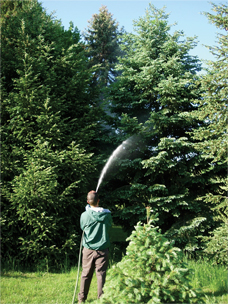 Tree and Shrub Care in York, PA