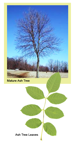 how to move person from one hrritage tree to anothrr